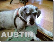 Austin 1